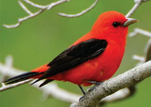 Citizen scientists aid in report on the state of birds ...
