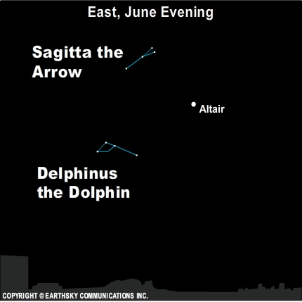 The star Altair is located near  two small but distinctive constellations: Sagitta the Arrow and Delphinus the Dolphin.