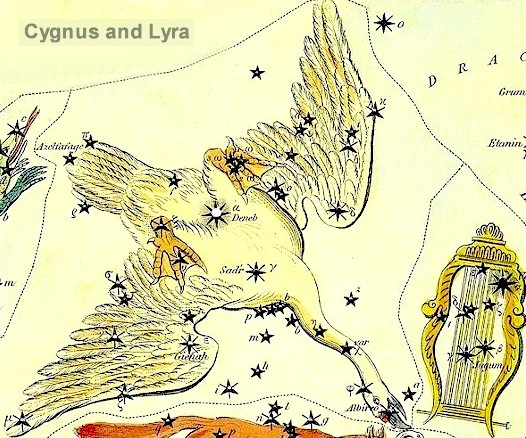 The constellation Cygnus the Swan.  The bright star Deneb is in the Tail of Cygnus.  Image via Constellation of Words