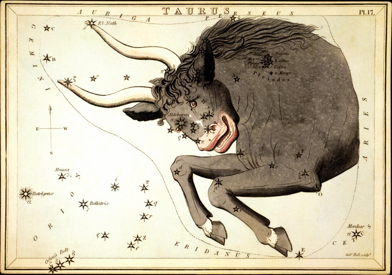 Antique etching of front half of a bull superimposed over a star chart.