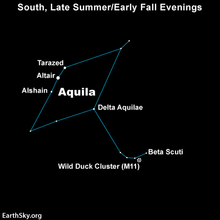 Star chart of Aquila with five stars and Messier 11 labeled.