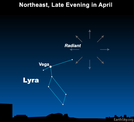The radiant point for the yearly Lyrid meteor shower is near Vega, brightest star in the constellation Lyra the Harp.