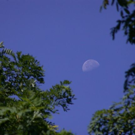 Can you see a daytime moon? At what time? | Human World | EarthSky