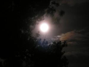 Near-full Moon through Cottonwoods 7/24/2010