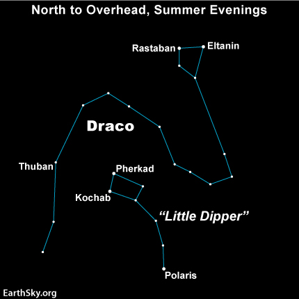 Eltanin and Rastaban mark the head of Draco the Dragon.  You'll find these stars in the northern sky.