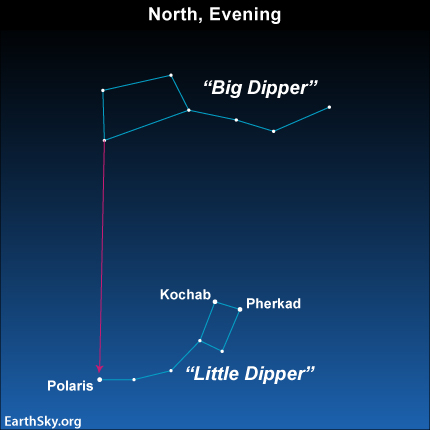 Use the two outer stars in the bowl of the Big Dipper to find Polaris, which marks the end of the handle of the Little Dipper.  Kochab and Pherkad are in the bowl of the Little Dipper.