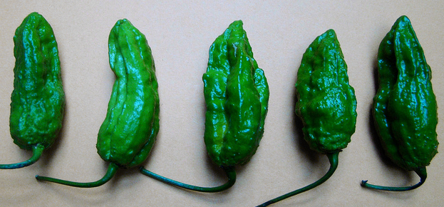Immature green ghosts. Image via Vasenka.