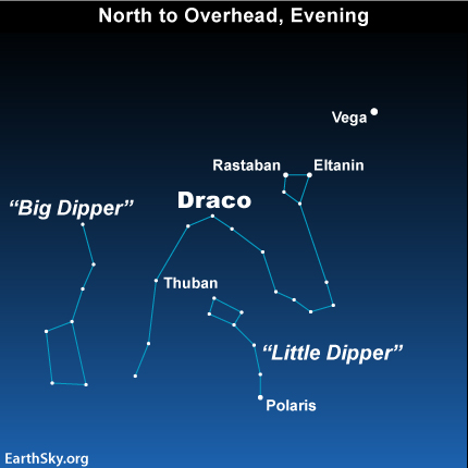 The constellation Draco the Dragon writes around the North Star, Polaris.  You'll find it between the Big Dipper and Little Dipper.