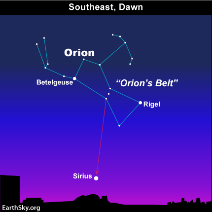 Image result for sirius in orion