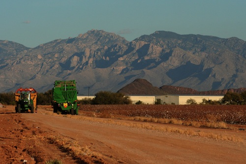 A cotton farm in Arizona. Future site for biofuels?
