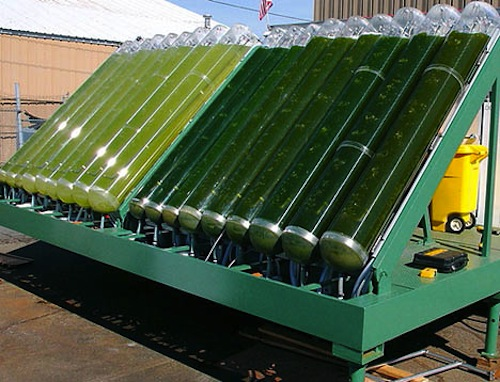 A photobioreactor, used to grow algae to make biodiesel. Image Credit: Jurveston