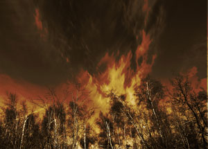 forestfire_flickr_300