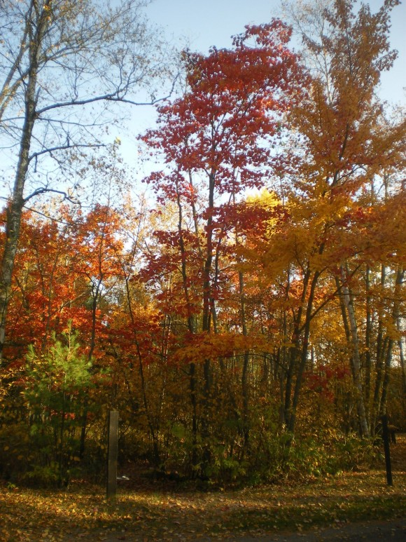 Open woodland scene with trees turning yellow and red.