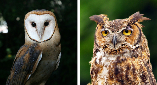 A barn owl (L) and a typical owl (R). Image Credit: Jitze-Couperus and mybulldog