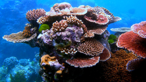 coral_life_590