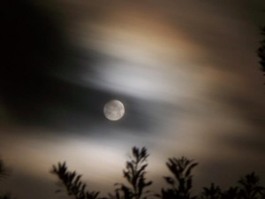 Full moon through hazy clouds over waving treetops.