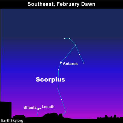 If you're in the Northern Hemisphere, Shaula and Lesath will come over your southeastern horizon sometimes this month.  They're a hopeful sign that spring is coming.
