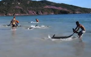 Dophins rescused in Brazil March 5, 2012