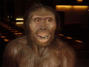 """Did climate change make """"Lucy"""" a loser and Homo a winner? Reconstruction of Australopithecus afarensis (wikipedia)."""
