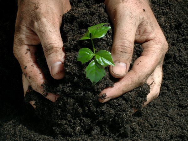 Fertilizers linked to higher nitrous oxide in atmosphere for Soil environment