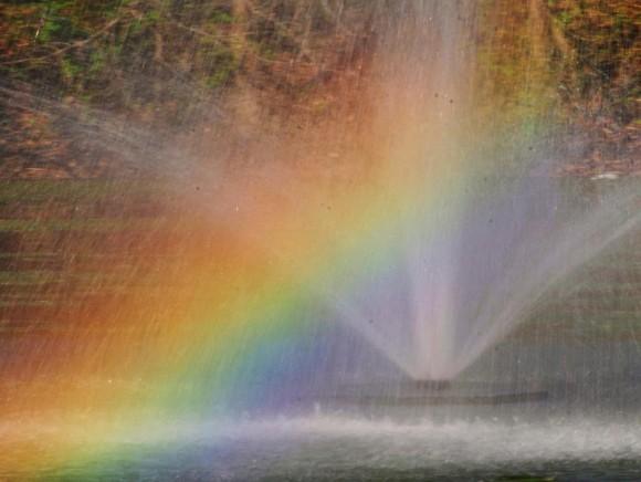 Who Loves Rainbows Earth Earthsky