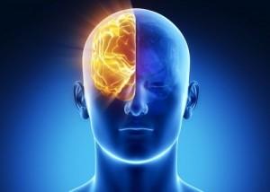 Right hemisphere via Shutterstock