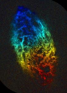 Radio map of galaxy M33