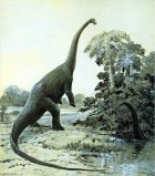 sauropoda1