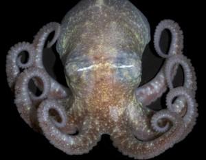 Image Credit: Elaina Jorgensen, NOAA