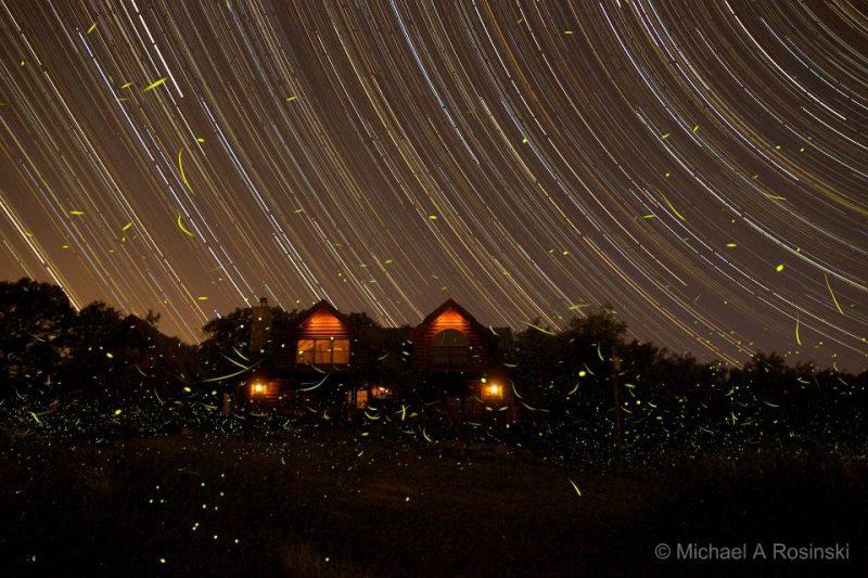 Why fireflies light up | Earth | EarthSky