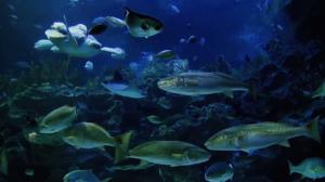 seafood_sealife_ocean_570