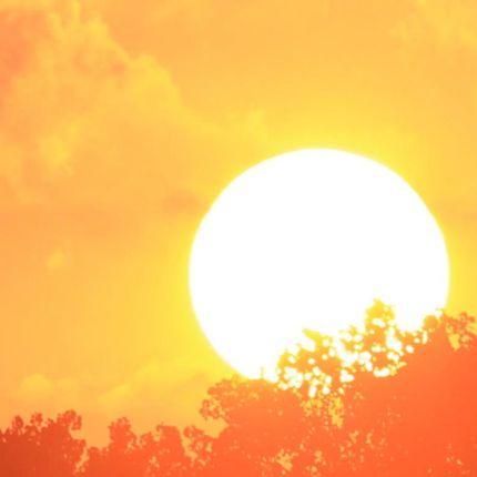 Huge glowing white sun against fiery yellow sky, tree silhouettes in orange.