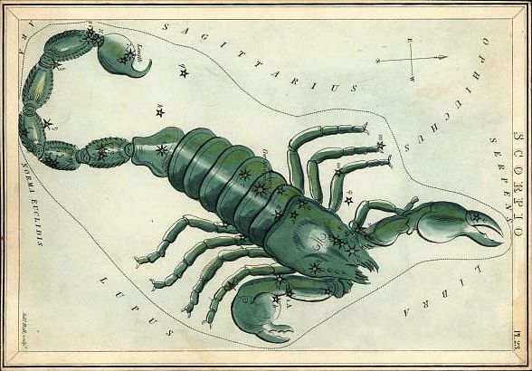 Antique drawing of a green scorpion with stars marked on it.