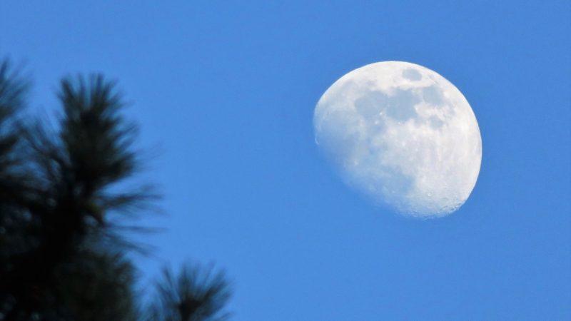 Waxing gibbous moon, rising - June 15, 2016 - caught by Tonia Coleman-Klein in Atlanta, Georgia.  Thanks, Tonia!
