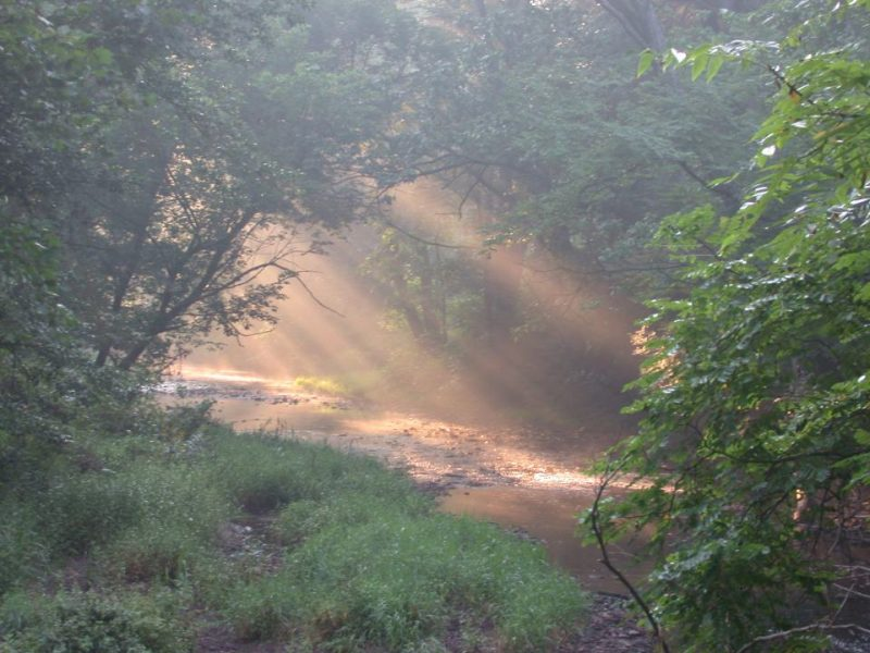Sunlight filtering through trees on a stream.
