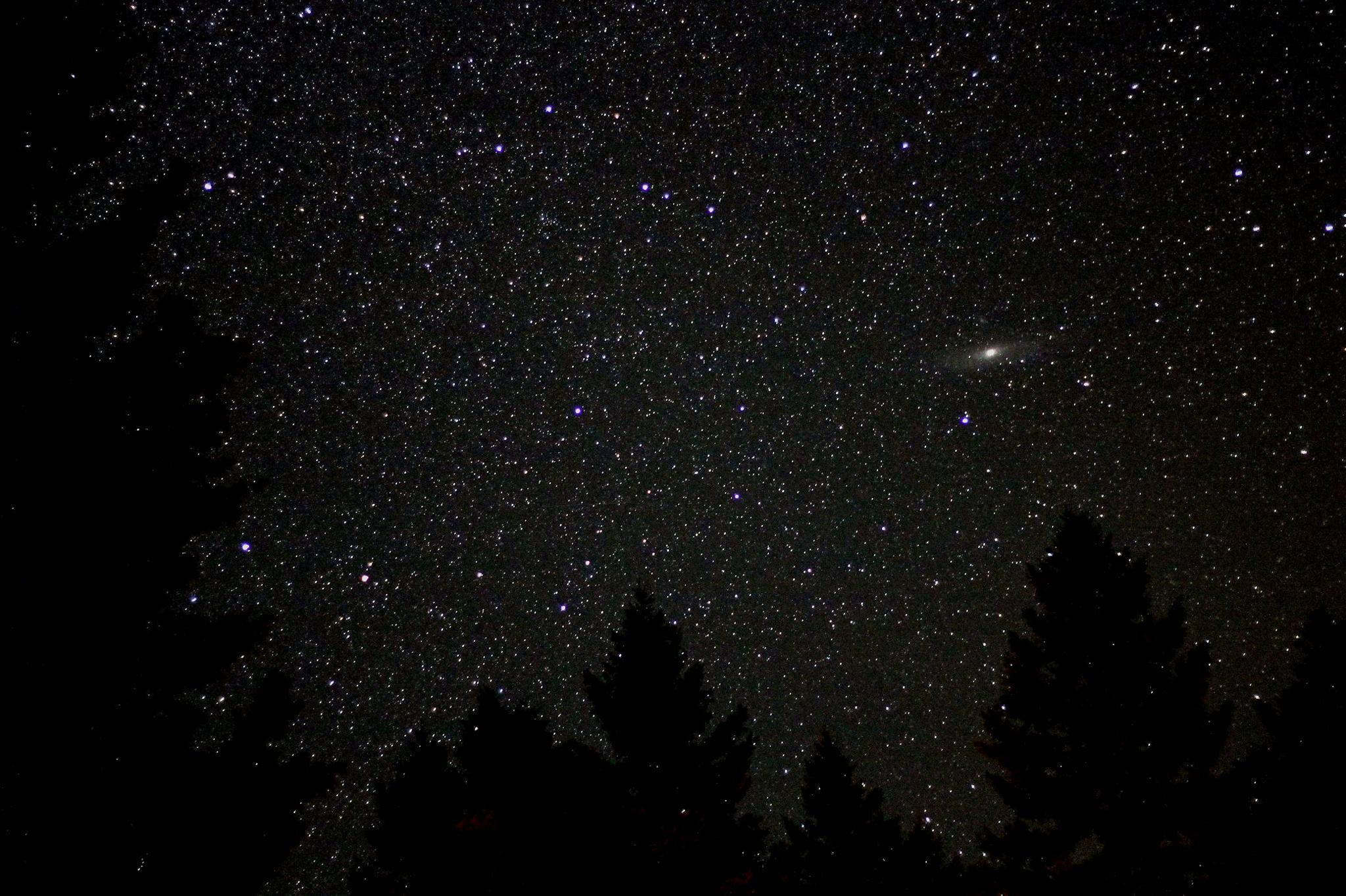 Dense star field containing oblong light streak with bright center, above sihouetted pine trees.