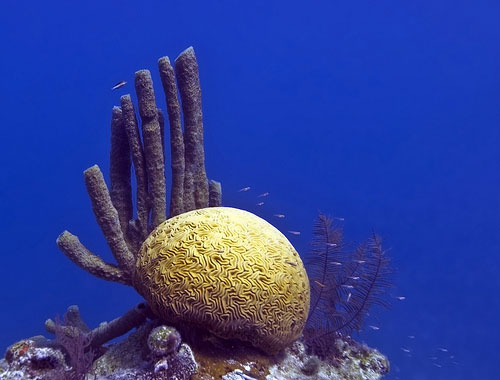 Corals in Belize. Image Credit: Jean-Marc Kuffer via Flickr.