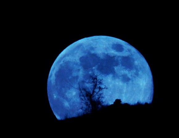 Huge zoomed in full moon colored blue against silhouetted desert vegetation.