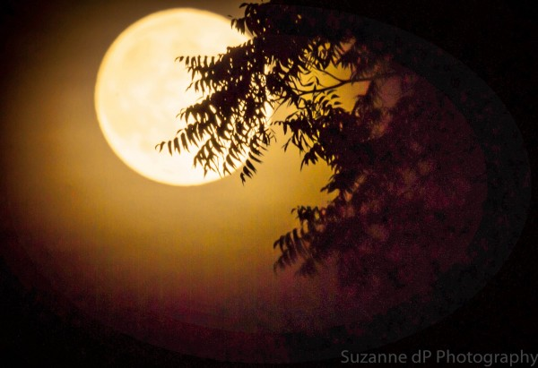 Harvest Moon on September 29, 2012, as seen by our friend Suzanne Dos Passos in Oregon.