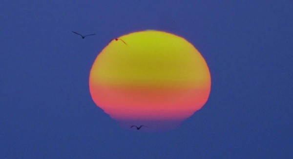 Almost whole yellow sun, pink at bottom, tiny green spot on top, seagulls in foreground.