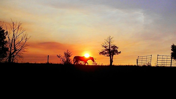Rural scene with sunset directly behind a silhouetted horse in the distance.