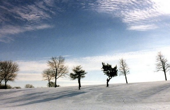 Six bare trees with long shadows on a snowy hillside.