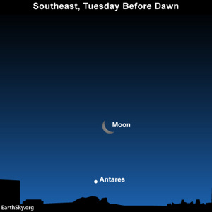 After Orion sets in the west in the wee hours before dawn, look for the moon and Antares low in the southeast sky