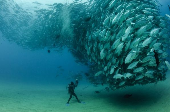 Video: Underwater fish tornado