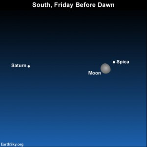 If you'd rather get up early than stay up late, look for the moon, Spica and Saturn in the southern sky before dawn.