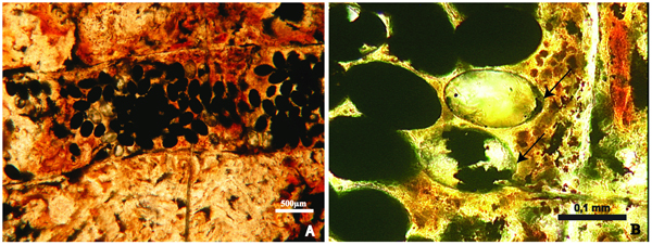 Image: from Dentzien-Dias et. al. PLoS ONE