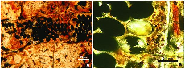 Image: from Dentzien-Dias et. al. PLoS ONE