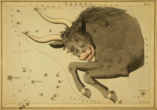 The constellation Taurus the Bull. Image credit: Old Book Art Image Gallery