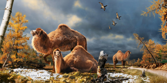 Artists rendition of a high arctic camel