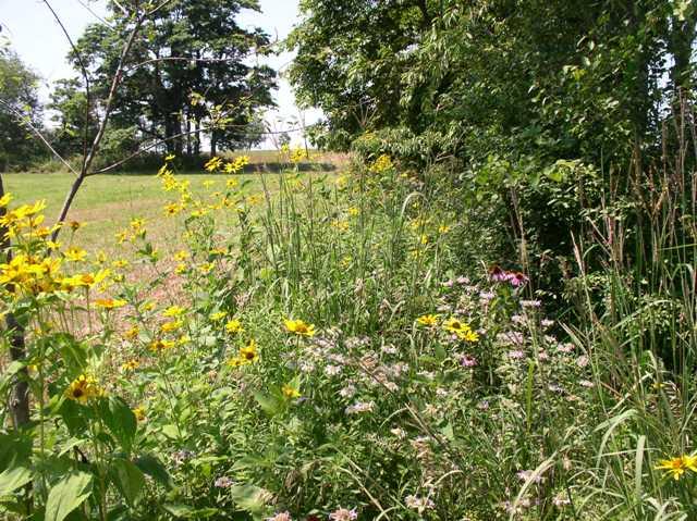 Wildflower pollinator habitat by the USDA